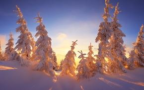 Картинка зима, небо, лучи, свет, снег, ветки, голубое, красота, сказка, ели, мороз, сугробы, тени, солнечно, ёлки, …
