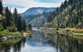 Картинка лес, горы, озеро