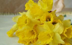 Картинка Цветы, Весна, Букет, Нарциссы
