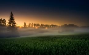 Обои закат, поле, туман