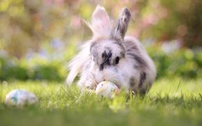 Картинка трава, природа, животное, яйца, кролик, пасха, боке