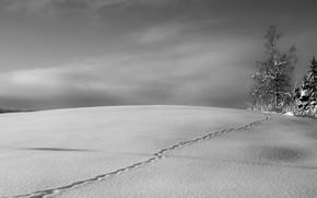 Картинка зима, снег, дерево, след