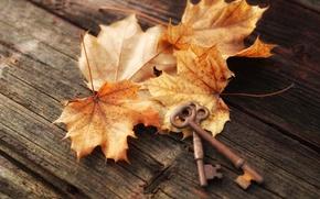 Обои листья, осень, ключи, доски, клён