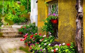 Картинка Окно, Цветочки, Flowers, Colors, Двор, Горшки