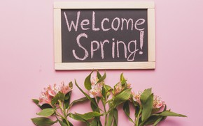 Картинка цветы, лилии, весна, розовые, fresh, pink, welcome, flowers, spring, lily, tender