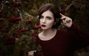 Картинка листья, ветки, поза, ягоды, портрет, макияж, сад, прическа, шатенка, красивая, джемпер