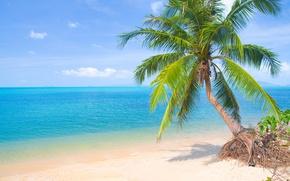 Картинка песок, море, пляж, солнце, пальмы, берег, summer, beach, sea, island, sand, paradise, palms, tropical