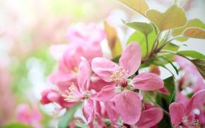 Картинка дерево, Цветы, весна, цветение
