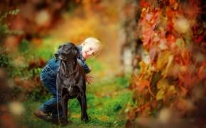 Картинка осень, природа, собака, мальчик