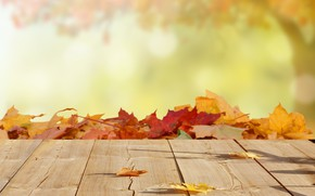 Обои листья, блюр, клен, осень, древесина