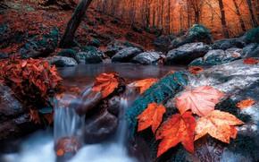 Картинка осень, лес, листья, деревья, пейзаж, природа, ручей, камни, течение