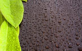 Картинка листья, вода, капли, роса