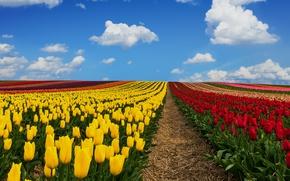 Картинка поле, небо, облака, Германия, тюльпаны