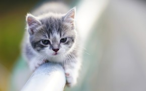 Картинка котенок, фон, малыш