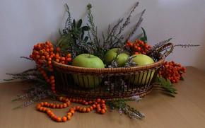 Картинка лето, цветы, ягоды, яблоки, фрукты, рябина, композиция, вереск