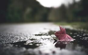 Картинка осень, лист, лужа