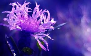 Картинка цветок, макро, розовый, красота