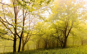 Картинка лес, лето, деревья