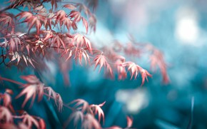 Картинка листья, макро, природа, дерево