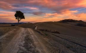 Картинка дорога, закат, дерево