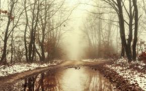 Картинка зима, дорога, лес, туман