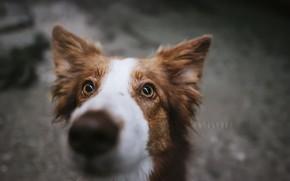 Картинка друг, взгляд, собака