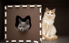 Картинка кот, кошки, рамка, котёнок