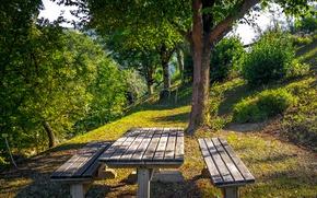 Картинка зелень, лето, трава, солнце, деревья, парк, склон, Италия, столик, лавочки, botanical garden, Casola Valsenio