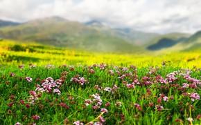 Картинка пейзаж, цветы, горы, природа, весна, травка
