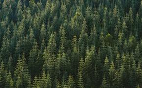 Картинка лес, деревья, природа, леса