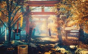 Обои осень, цветы, природа, тории