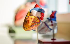 Обои любовь, фон, подарок, сердце, сердечко, день святого валентина, подставка, праздники, день всех влюбленных, композиция, орган, ...