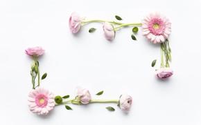 Картинка цветы, розы, розовые, герберы, pink, flowers, roses, gerbera, frame, floral