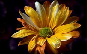 Обои фон, макро, цветок