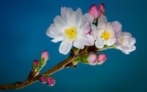 Обои сад, весна, ветка, цветы