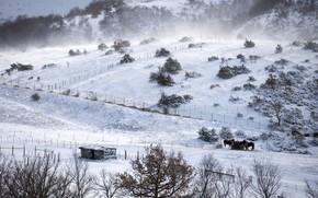Картинка зима, поле, кони