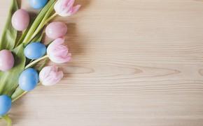 Картинка цветы, весна, Пасха, тюльпаны