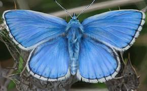 Картинка арт, John LaBrada, Blue Butterfly