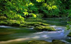 Картинка зелень, листья, река, дерево
