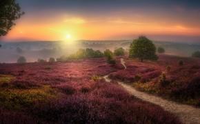 Картинка поле, закат, Herman van den Berge, The Veluwezoom