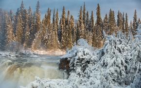 Обои Манитоба, река, Канада, лес, Canada, ели, Pisew Falls Provincial Park, Pisew Falls, Manitoba, водопад, зима