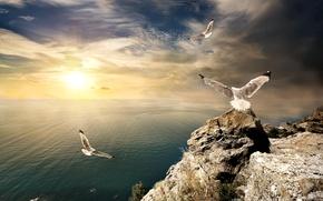 Обои чайки, камни, Крым, горизонт, небо, солнце, облака, скалы, птицы, море, берег, рассвет, лучи, утёс