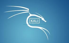Картинка linux, dragon, Mr Robot, Kali, kali linux