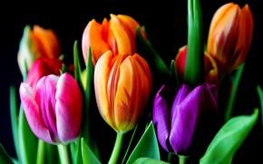 Обои листья, тюльпаны, лепестки, весна