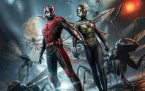 Обои Муравей, Marvel, Человек-муравей, Ant-Man and the Wasp, Человек-муравей и Оса, Промо, Promo Art