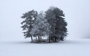 Картинка зима, снег, деревья, природа
