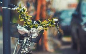 Обои цветы, велосипед, город, улица, корзина, фара, фонарь, bicycle