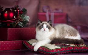 Обои кот, ragdoll, рэгдолл, новый год, подушки, коробки, рождество, праздник, подарки, животное, кошка