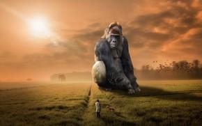 Картинка человек, собака, обезьяна, горилла