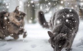 Обои зима, кошка, снег
